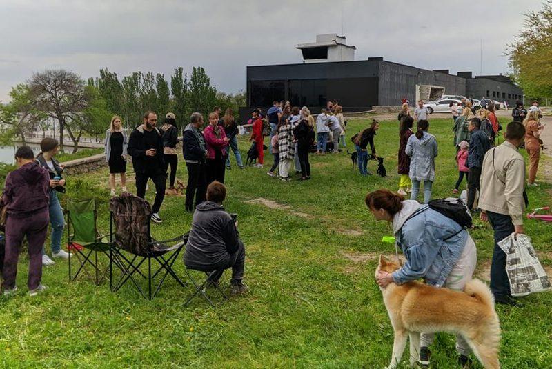 """Во время """"тусовки"""" в Николаеве 11 бездомных собак нашли хозяев"""