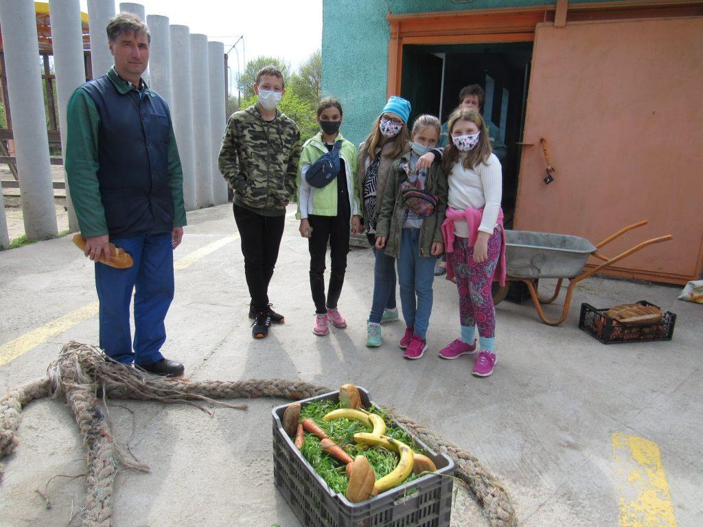 В Николаевском зоопарке слона Шанти поздравили с днем рождения: ящиком травы с 4 бананами (ФОТО) 1