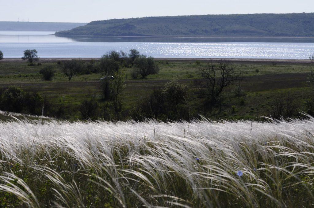 В последних целиннных степях на Николаевщине расцвел ковыль (ФОТО) 1
