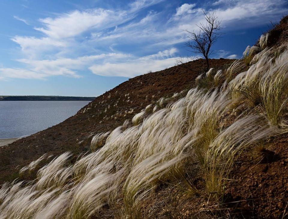 В последних целиннных степях на Николаевщине расцвел ковыль (ФОТО) 5