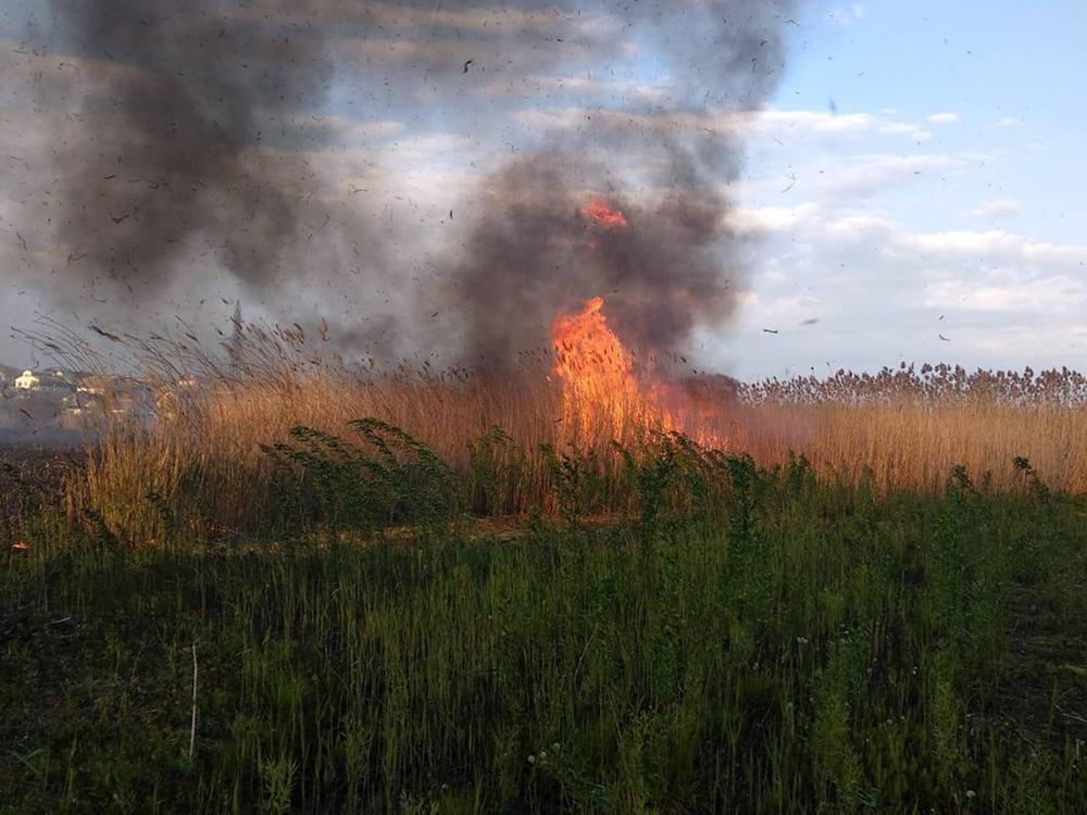 На окраине Николаева несколько часов тушили 2 га камышей – их подожгли (ФОТО) 5