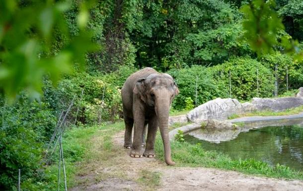 В США слониха судится с зоопарком – требует отправить ее в заповедник (ФОТО)