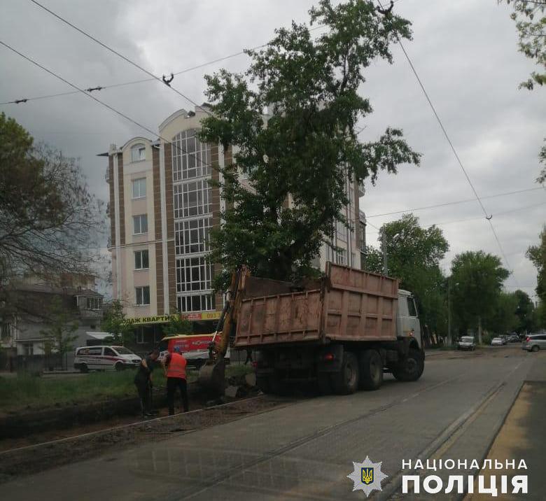 В Николаеве двое нелегалов укладывали плитку на Потемкинской - одного из них точно выдворят (ФОТО) 5