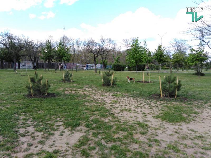 В Николаеве в праздничные выходные украли высаженные деревья: 3 сакуры и 1 сосну (ФОТО) 7