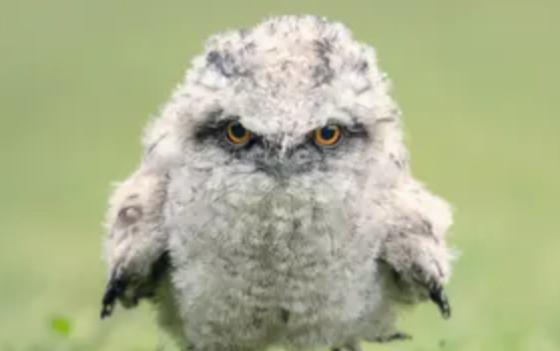 Самыми фотогеничными птицами в Инстаграмме стали козодои – исследование