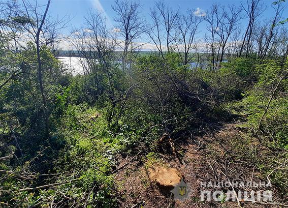 В Вознесенском районе снова задержали машину с незаконно спиленным лесом (ФОТО) 1