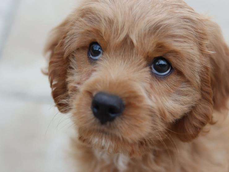 В ответе за тех, кого приручили? В Португалии люди начали возвращать собак, которых взяли в семью во время локдаунов