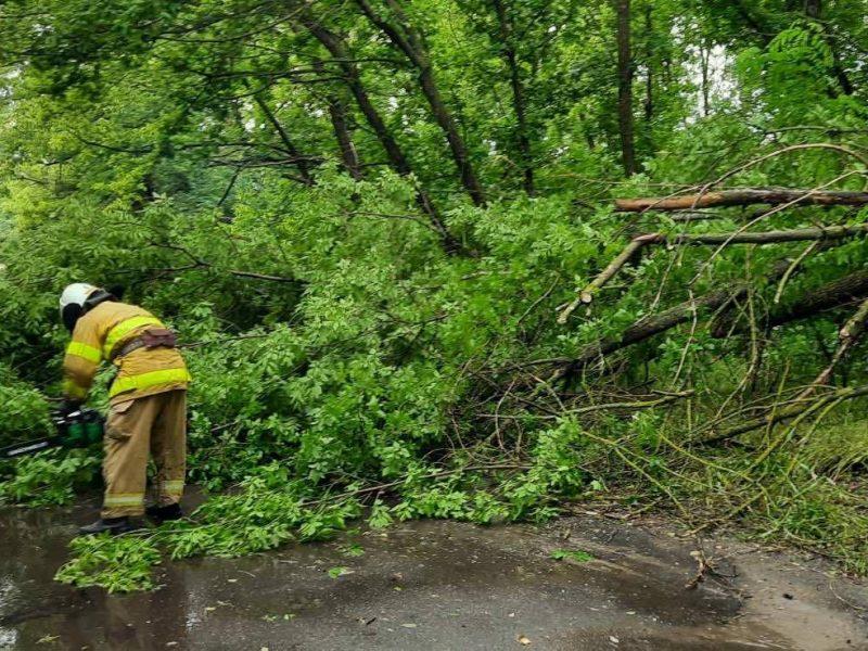 Последствие непогоды на Николаевщине: спасатели убирали деревья с дорог и откачивали воду из подвала