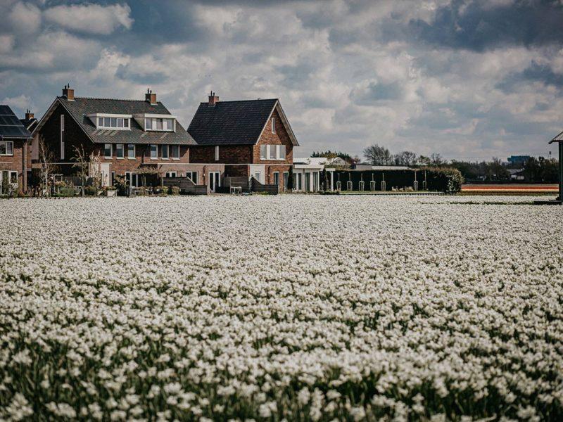 Оказывается, так тоже можно: Копенгаген превратит 7 гектаров асфальта в цветочные поля