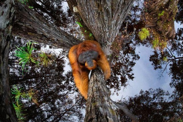 Орангутан в небе или над водой? Удивительные фото, победившие на конкурсе снимков дикой природы (ФОТО)