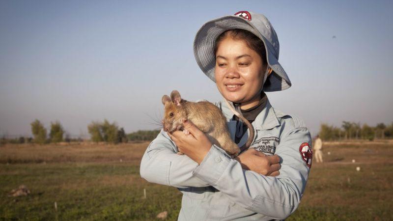 Знаменитую крысу-сапера проводили в отставку