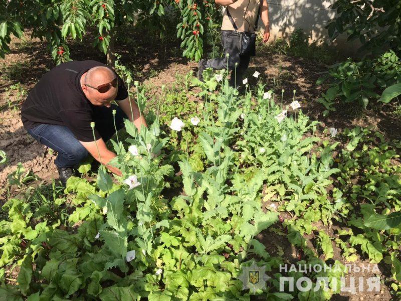 В Баштанском районе полицейские изъяли у местных жителей почти 200 кустов снотворного мака и 190 кустов конопли (ФОТО)