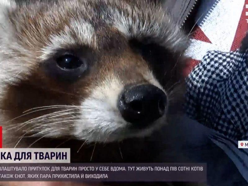 На Николаевщине супруги помогают животным, пострадавших от человеческой жестокости. Присоединяйтесь! (ВИДЕО)