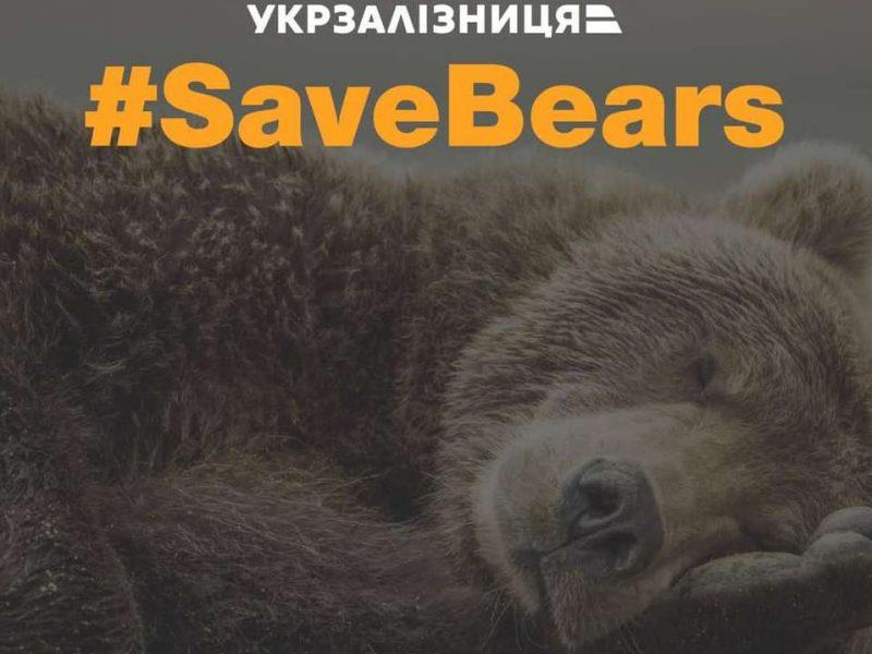 """На балансе Укрзализныци """"нашлись"""" 2 медведя – их отдадут в Нидерланды"""