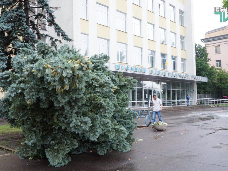 В центре Николаева из-за дождя упала огромная ель (ФОТО и ВИДЕО)