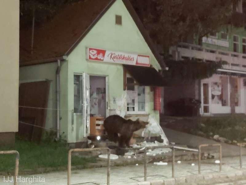 В Румынии медведи вошли в город – громят магазины, воруют еду в домах (ВИДЕО)