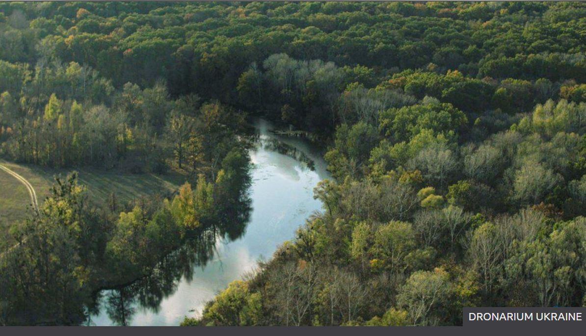 В лесхозах Украины обнаружили нарушения почти на 250 млн гривен 5