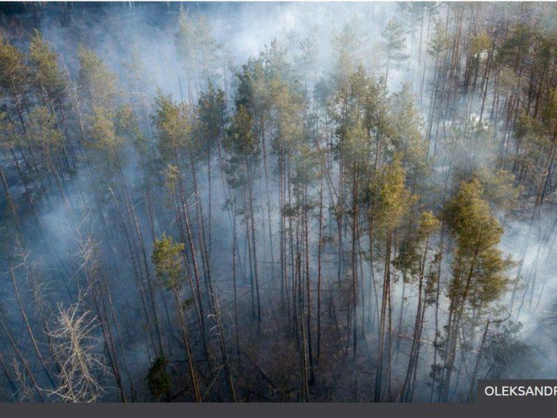 Миллиард деревьев от Зеленского. Эксперты предупреждают, что может быть хуже (ФОТО)