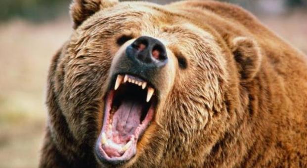 Медведь напал на группу туристов России, один человек погиб, двое ранены