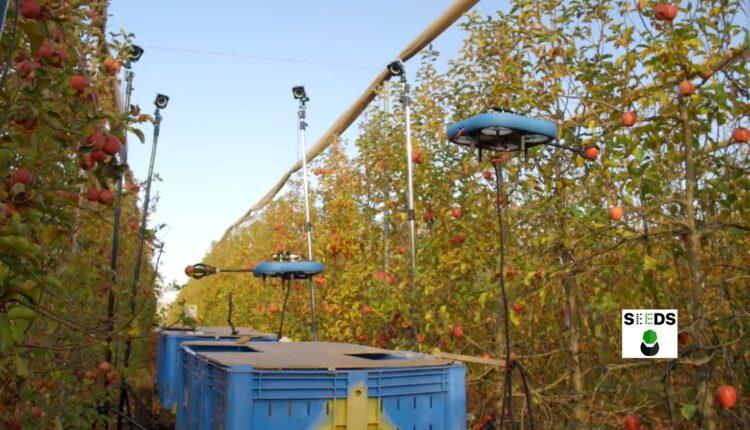 Не ест, не спит, не сачкует. В Израиле представили беспилотных роботов для сбора фруктов (ВИДЕО)