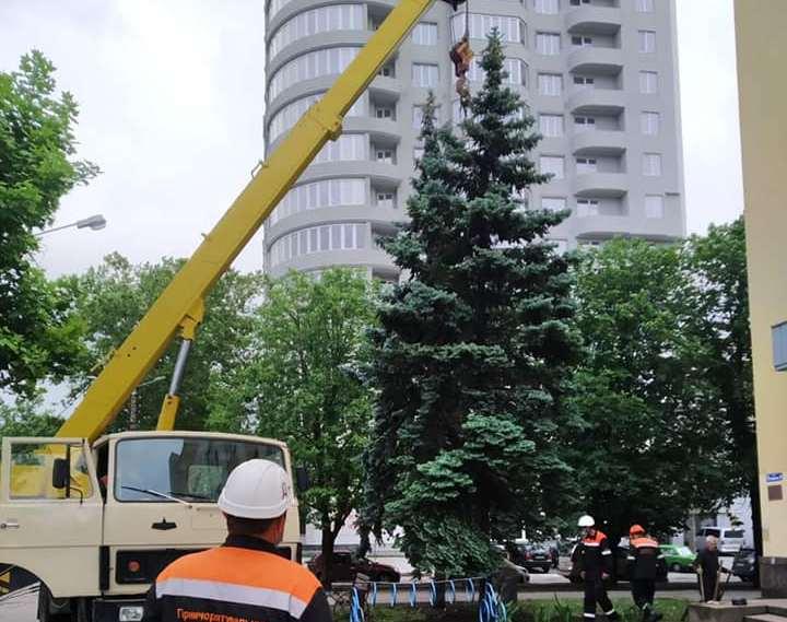 Упавшую в центре Николаева 8-метровую ель вернули в вертикальное положение (ФОТО)