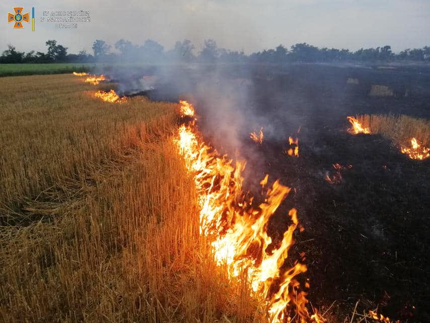 Стерня, пшеница на корню и трава - что тушили в Николаевской области (ФОТО) 1