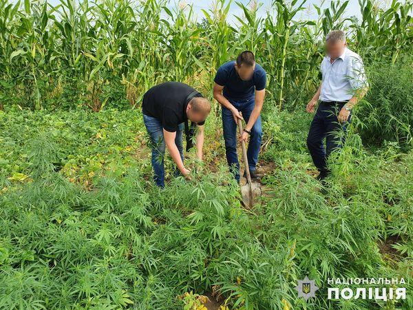 Почти 200 кустов конопли вырастил житель Вознесенского района (ФОТО, ВИДЕО)