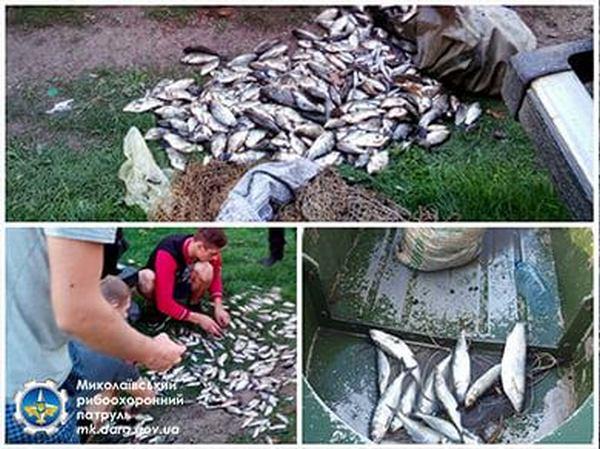 За неделю Николаевский рыбоохранный патруль конфисковал у браконьеров 324 кг рыбы