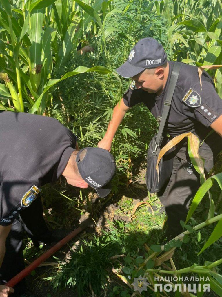 В кукурузе спрятать не удалось: в Первомайском районе у пенсионера изъяли 84 куста 2-метровой конопли (ФОТО) 1
