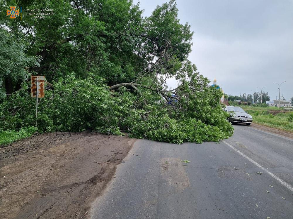 На выезде из Николаева упавшее старое дерево перекрыло трассу М-14 - спасатели убрали (ФОТО) 1