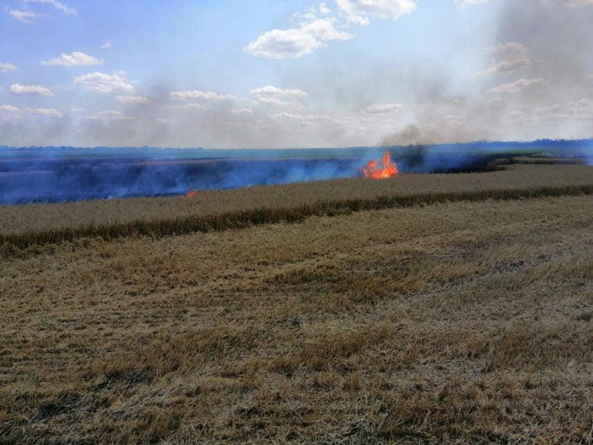 У Баштанки горела пшеница на корню, а у Николаева – Балобановский лес (ФОТО) 5