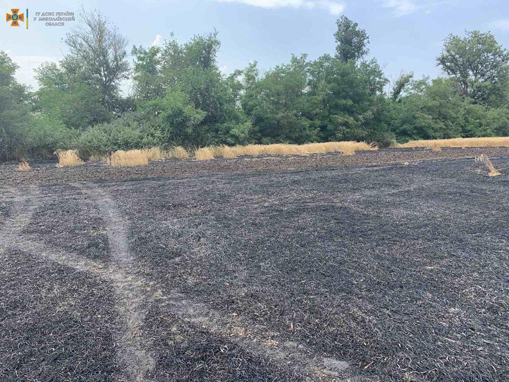 Сегодня горела Баштанская городская свалка и 10 га пшеницы на корню (ФОТО) 13