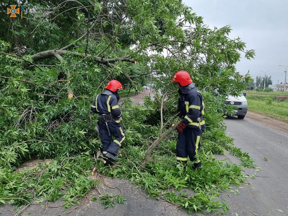 На выезде из Николаева упавшее старое дерево перекрыло трассу М-14 - спасатели убрали (ФОТО) 3