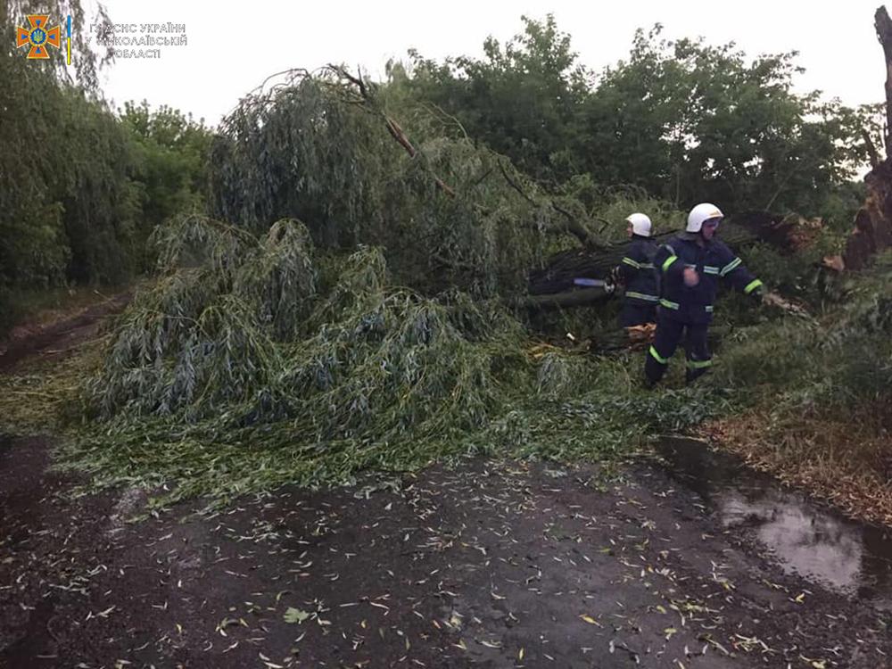 Ветер и ливни в двух районах Николаевщины завалили деревьями междугородние трассы (ФОТО) 11