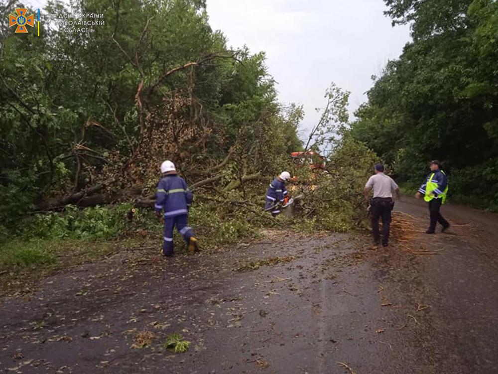 Ветер и ливни в двух районах Николаевщины завалили деревьями междугородние трассы (ФОТО) 9
