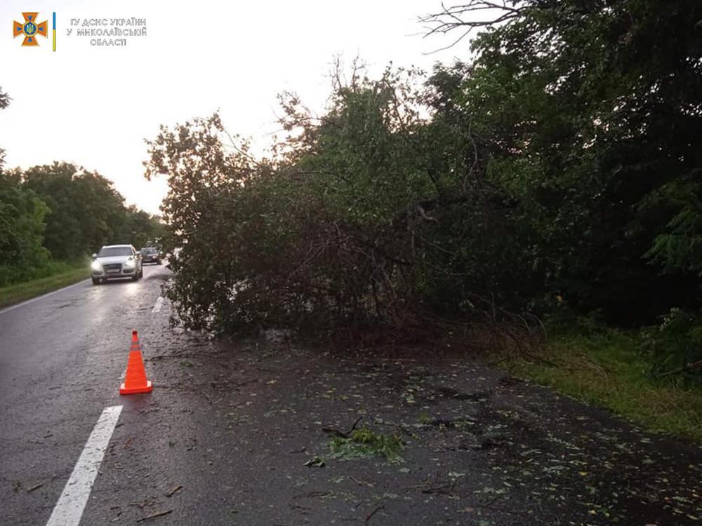 Ветер и ливни в двух районах Николаевщины завалили деревьями междугородние трассы (ФОТО) 13