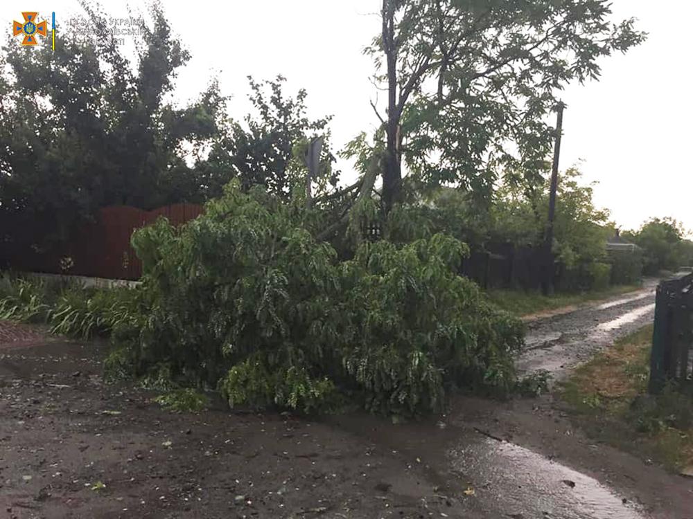 Ветер и ливни в двух районах Николаевщины завалили деревьями междугородние трассы (ФОТО) 7
