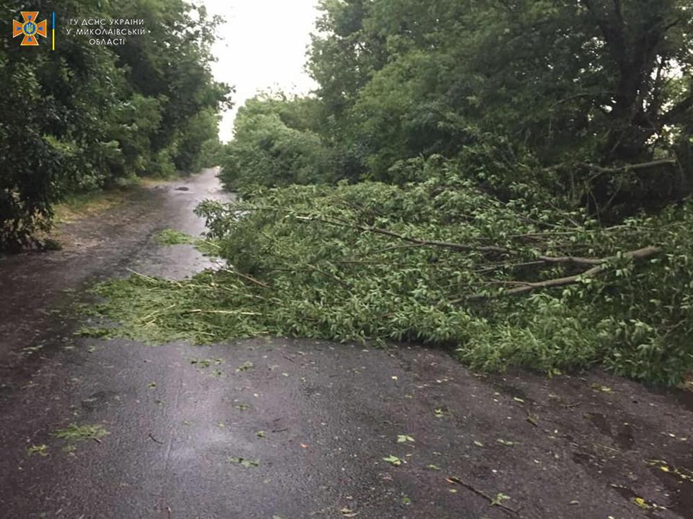 Ветер и ливни в двух районах Николаевщины завалили деревьями междугородние трассы (ФОТО) 3