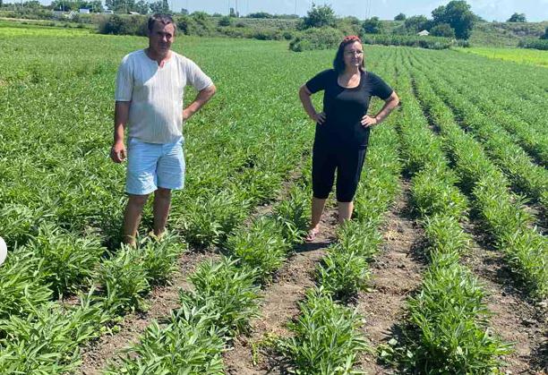 На Николаевщине ветераны АТО объединились для выращивания лекарственных трав