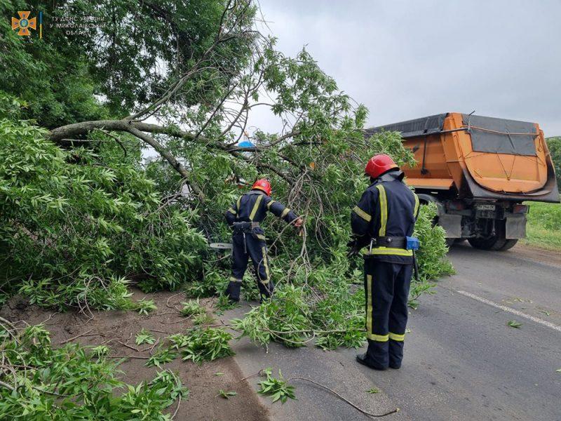 На выезде из Николаева упавшее старое дерево перекрыло трассу М-14 — спасатели убрали (ФОТО)