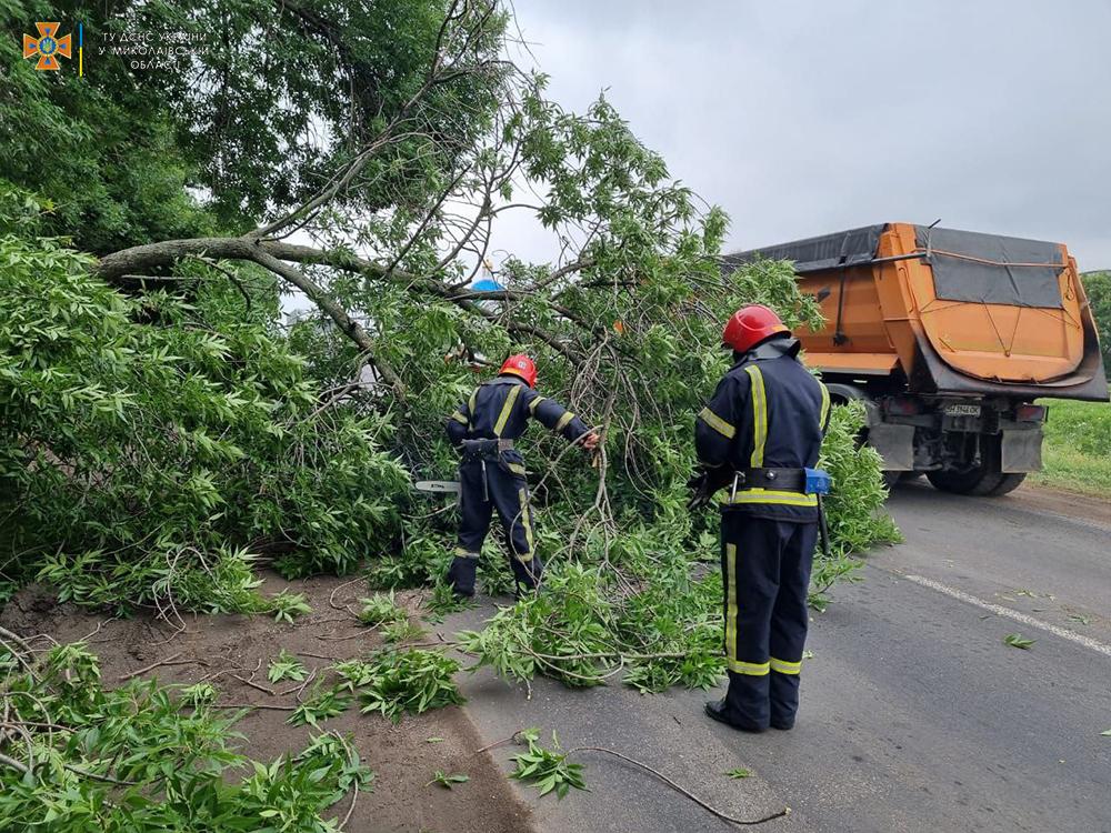 На выезде из Николаева упавшее старое дерево перекрыло трассу М-14 - спасатели убрали (ФОТО) 5