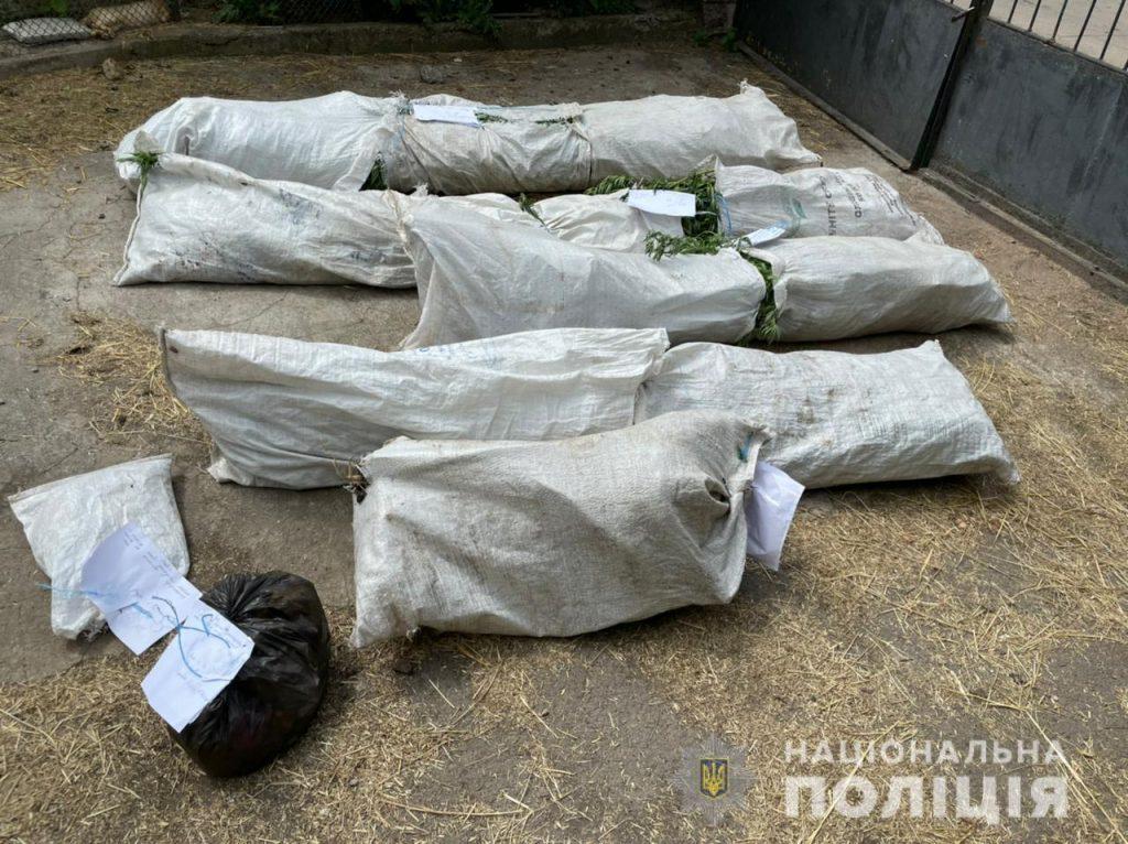 В кукурузе спрятать не удалось: в Первомайском районе у пенсионера изъяли 84 куста 2-метровой конопли (ФОТО) 5