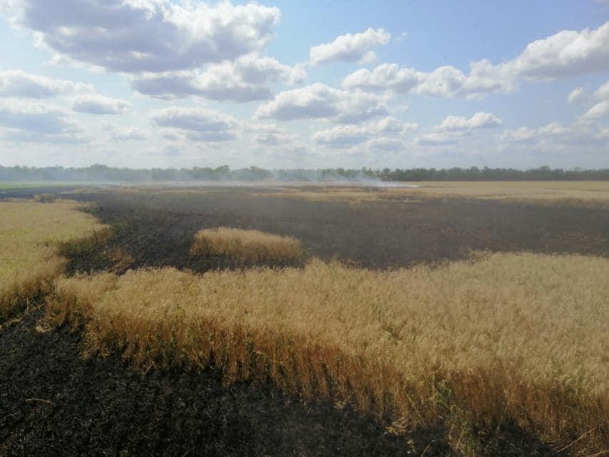 У Баштанки горела пшеница на корню, а у Николаева – Балобановский лес (ФОТО) 9
