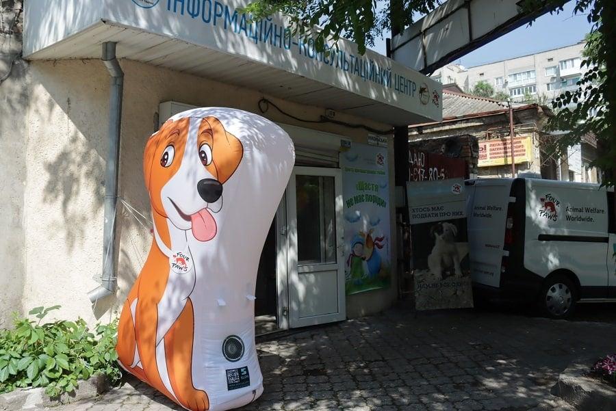 Счастье не имеет породы: в Николаеве открыли центр пристраивания бездомных животных (ФОТО) 7