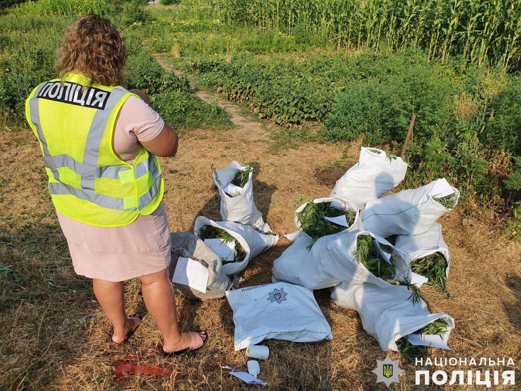 Почти 200 кустов конопли вырастил житель Вознесенского района (ФОТО, ВИДЕО) 9