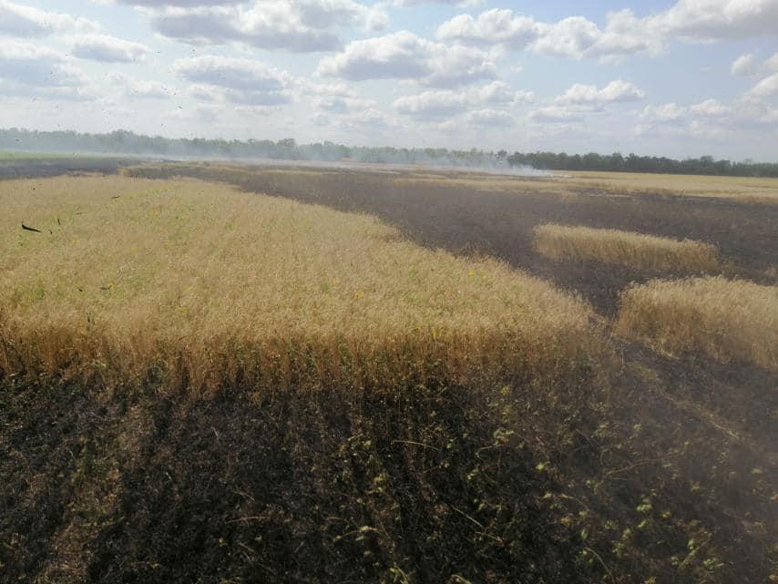 У Баштанки горела пшеница на корню, а у Николаева – Балобановский лес (ФОТО) 1