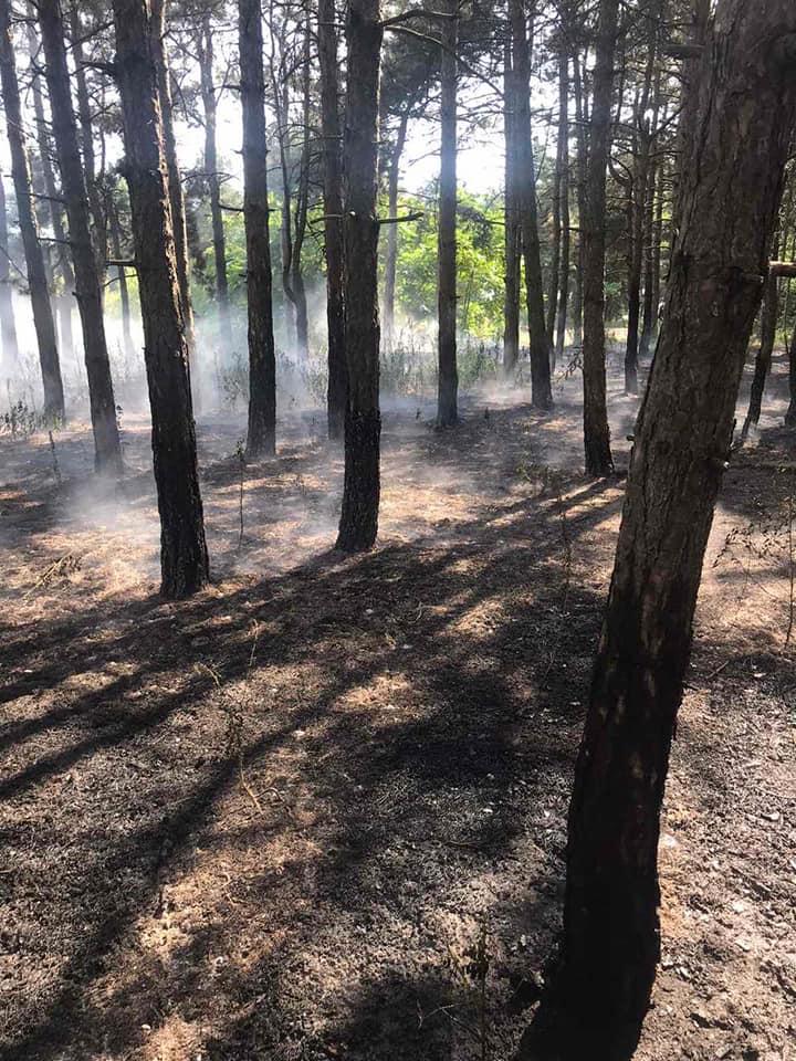 У Баштанки горела пшеница на корню, а у Николаева – Балобановский лес (ФОТО) 13