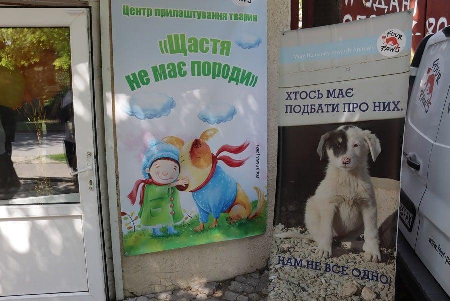 Счастье не имеет породы: в Николаеве открыли центр пристраивания бездомных животных (ФОТО) 11