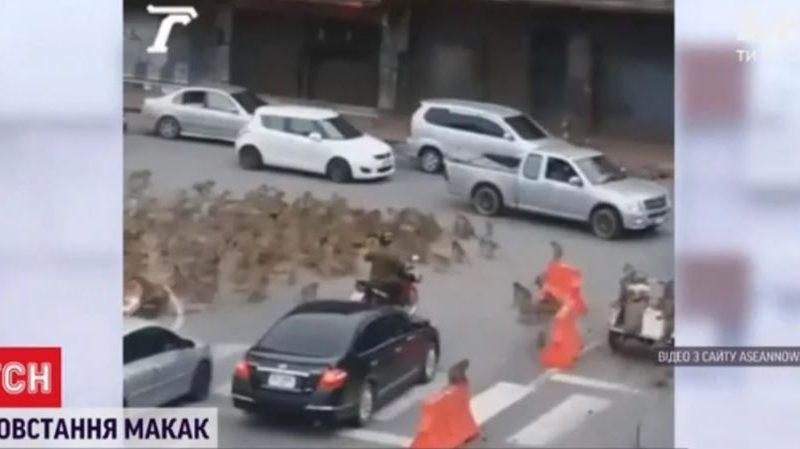 Туристы виноваты. В Таиланде бунт голодных обезьян (ВИДЕО)