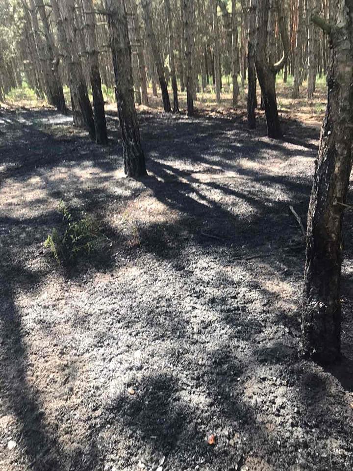 У Баштанки горела пшеница на корню, а у Николаева – Балобановский лес (ФОТО) 15